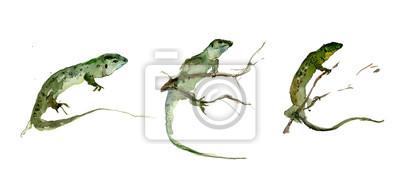 Zestaw zielonych jaszczurek na białym tle. akwarela.