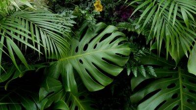 Naklejka Zieleni tropikalni liście Monstera, palma, paproć i ornamentacyjnych rośliien tła tło ,.