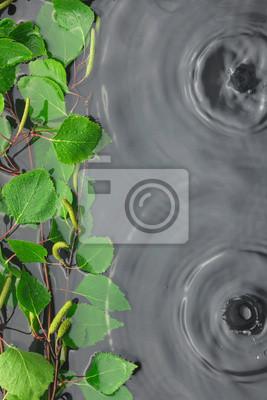 Zielona liści brzozy w wodzie w deszczu