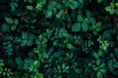 Naklejka Zielona roślina opuszcza tło, odgórny widok. Koncepcja wiosna przyrody