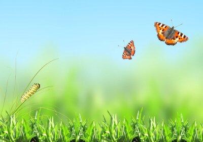 Naklejka Zielona trawa, gąsienica i motyl