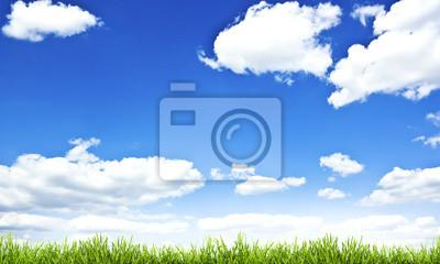 zielona trawa i błękitne niebo