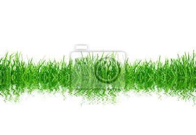 zielona trawa Izolacja na białym tle