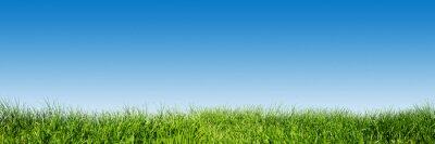 Naklejka Zielona trawa na błękitne niebo jasne, wiosna motyw natury. Panorama