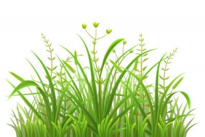 Naklejka Zielona trawa wzór na białym tle