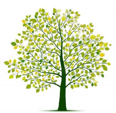 Naklejka zielone drzewo izolowane