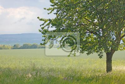 Zielone drzewo w szerokich świateł letni