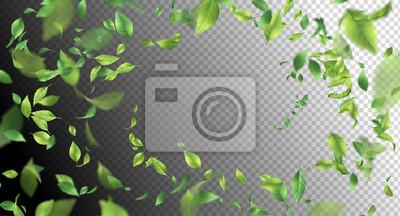 Naklejka Zielone liście pływające
