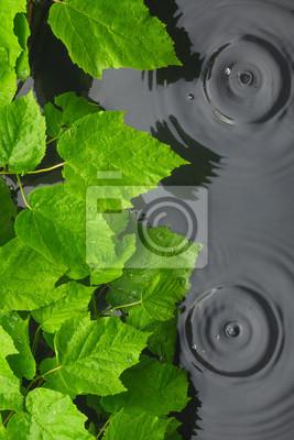 Zielone liście w wodzie w deszczu