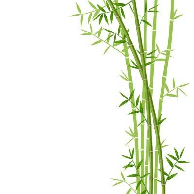 Naklejka Zielony bambus na białym tle, ilustracji wektorowych