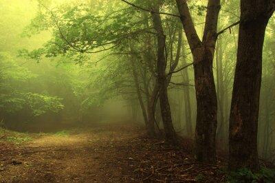 Zielony las z mgły