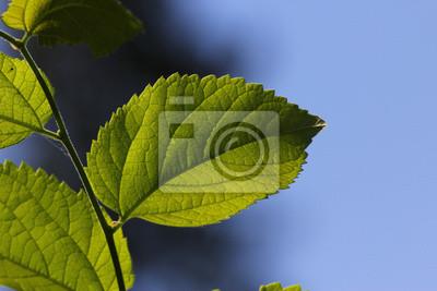 Zielony liść z drzewa
