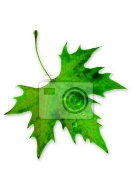 Zielony liść z rosy wody na nim.