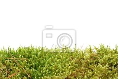 Zielony mech izolowane na białym tle
