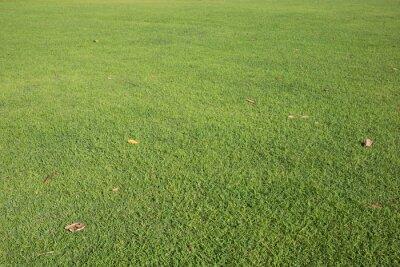 zielony trawnik i brązowe spadające liście