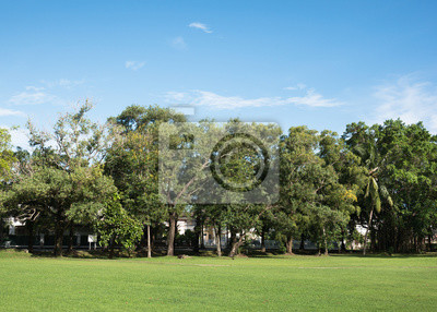 zielony trawnik i drzewa w parku z jasnym błękitne niebo i chmury
