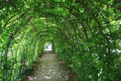 Naklejka Zielony tunel w ogrodzie