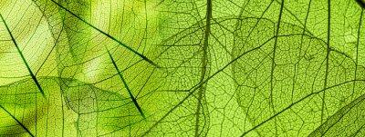 Naklejka Zielonych liści tekstury