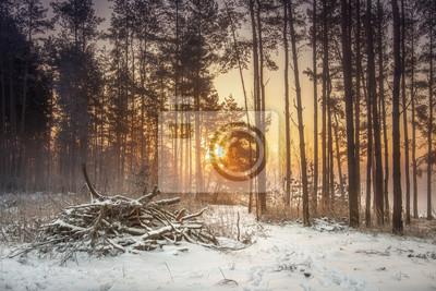 Zima natury krajobraz śnieżny las w ciepłym świetle słonecznym. Żywy mroźny las rano. Jaskrawy wschód słońca w świeżym zima lesie. Żywe słońce świeciło za drzewami.