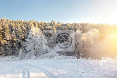 Zima natury krajobraz z światłem słonecznym w ranku. Mroźne drzewa pokryte szronem. Niesamowita zima. Piękna śnieżna zimy scena.