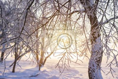 Zimowe tło. Mroźne drzewa rozgałęzia się w złotym świetle słonecznym przy zmierzchem. Szron na drzewie i roślinach. Zimowa scena. Boże Narodzenie tło. Nowy Rok
