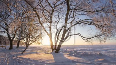 Zimowy krajobraz o wschodzie słońca. Śnieżne drzewa. Mroźna natura. Drzewa z szron na brzegu jeziora pokryte śniegiem. Ciepłe żółte światło słoneczne. Piękna zima naturalna scena.