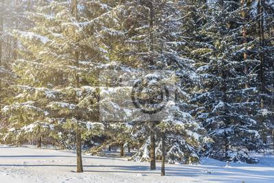 Zimowy las w słoneczny dzień. Śnieżne drzewa. Czas świąt. Xmas natury tło.