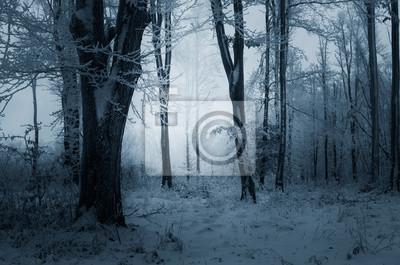 zimowy wieczór w śnieżnym lesie