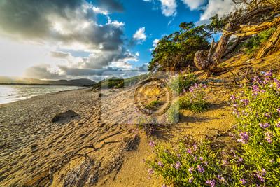 Złota piasek diuna w Alghero wybrzeżu przy zmierzchem