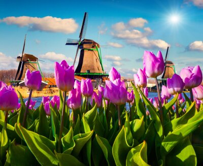Naklejka Znany holenderski wiatraki