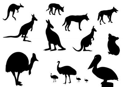 Naklejka zwierzęta australijskie sylwetka