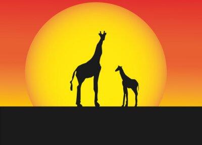 Naklejka Żyrafy afrykańskie kontrastami krajobrazu