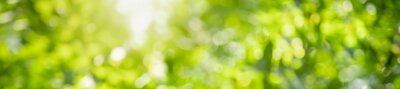 Obraz Abstract blurred out of focus and blurred green leaf background under sunlight with bokeh and copy space using as background natural plants landscape, ecology cover concept.