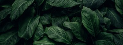 Obraz abstract green leaf texture, nature background, tropical leaf
