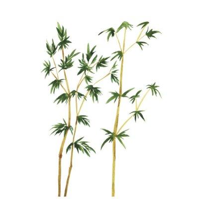 Obraz Abstrakcyjna dzikiego bambusa drzew na białym tle. Ręcznie rysowane ilustracji wektorowych Akwarele.