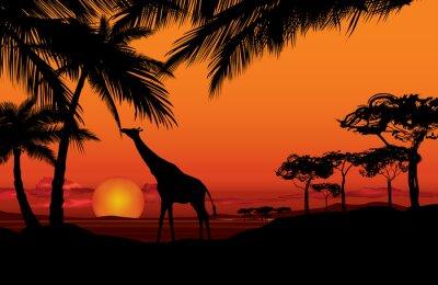 Obraz Afrykański krajobraz z żyrafa zwierząt sylwetki. Savanna charakter tle zachodu słońca