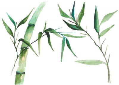Obraz Akwarela bambusa ilustracji