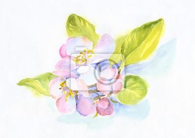 akwarela bukiet purpurowe kwiaty