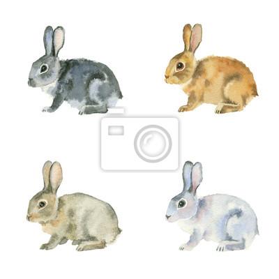 Akwarela. Czarny, czerwony, biały i brązowy króliki