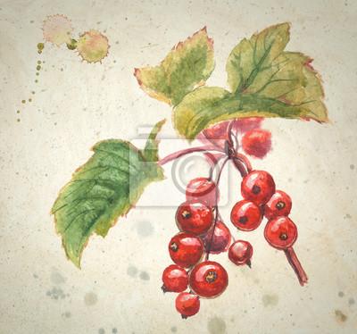 Akwarela - czerwona porzeczka. Czerwone Jagody z zielonymi liśćmi. Ręcznie malowane ilustracji samodzielnie na beżowym tle z teksturą.