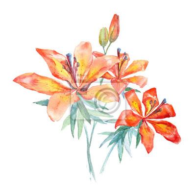 Akwarela czerwone kwiaty (lilie)