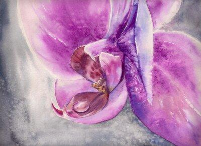 Obraz Akwarela dysząc różowy kwiat orchidei z małych kropli wody.