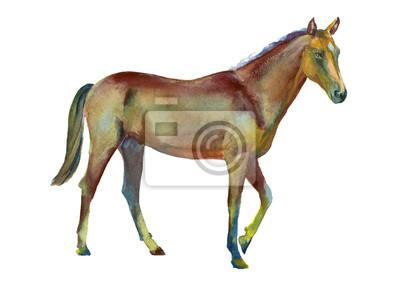 Akwarela Koń stojący
