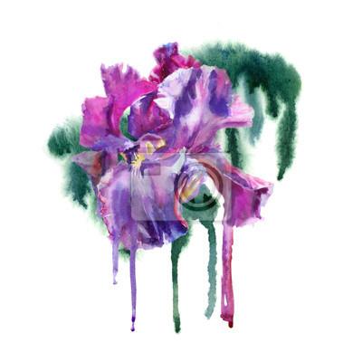 Akwarela kwiat. Fioletowe tęczówki.
