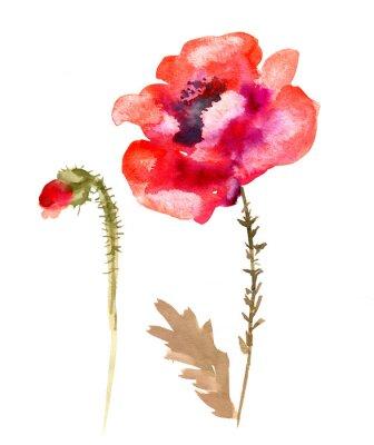 Obraz Akwarela kwiat maku