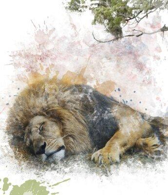 Obraz Akwarela Obraz Śpiąca Lion