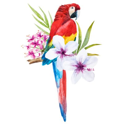 Obraz Akwarela papuga