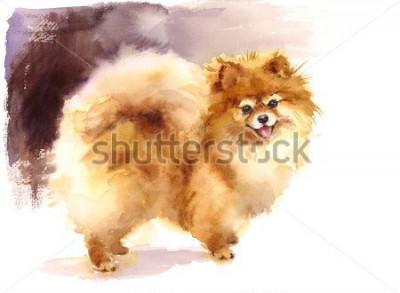 Obraz Akwarela pies Pomorskie portret ręcznie malowany