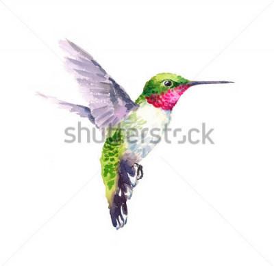 Obraz Akwarela ptak latający na rękę na białym tle