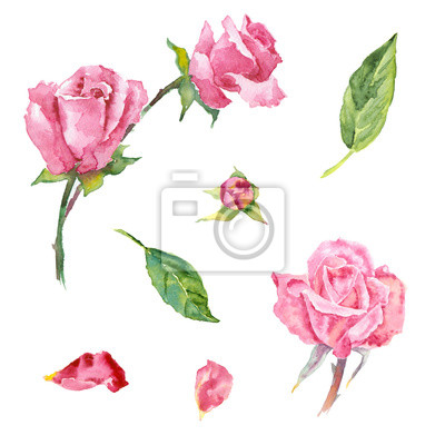Akwarela Rose (elementy)